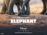 Elephant (2020)