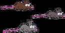 Kenny's Rats
