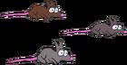Kennys-rats