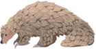 Non-human-animal-pangolin-cc