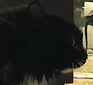 Talking Cat