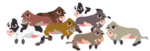Animals-baby-cows.png