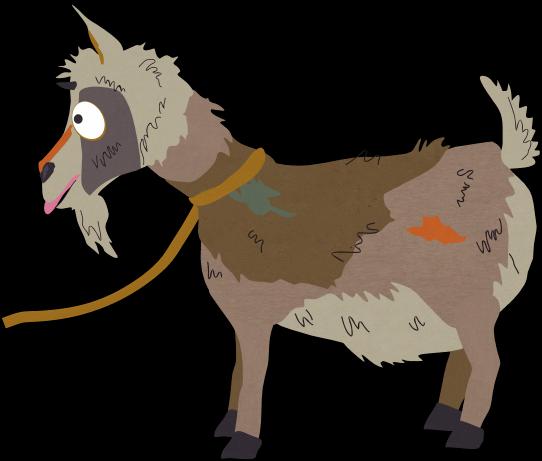 阿富汗山羊