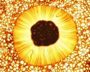 Proxima Centauri Sonnenfleck