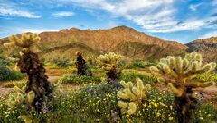 Ezith Desert.jpg