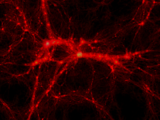 Intergalactic Gateway Network