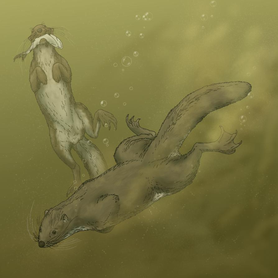 Otter dormouse
