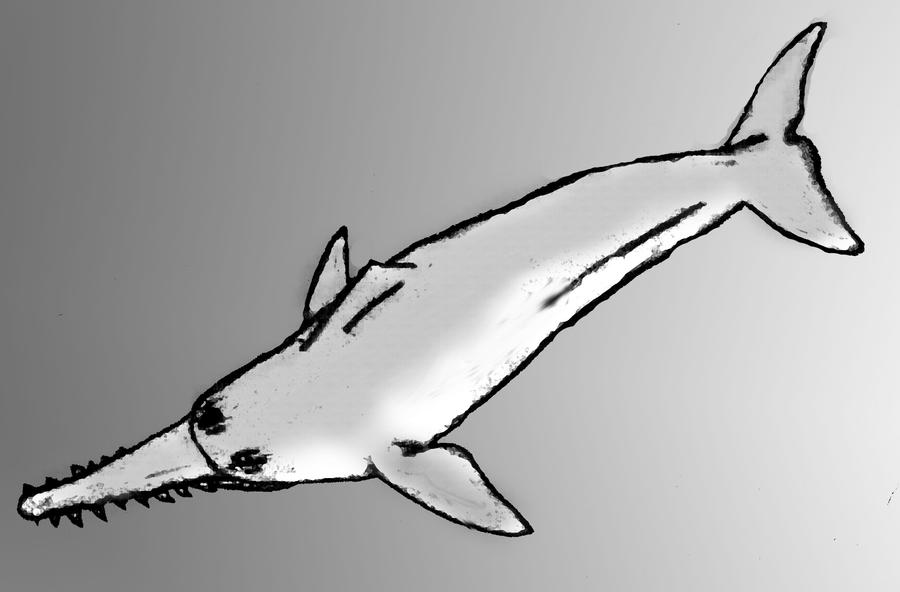 Sawtoothed Dolphin