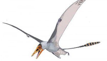 Hawk lizard
