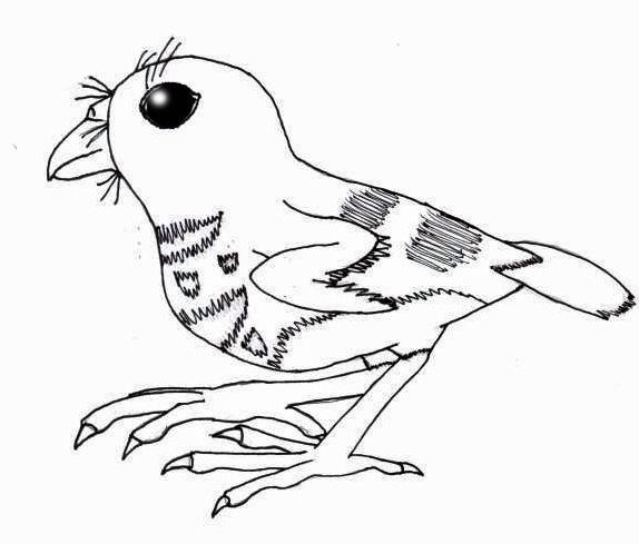 Kiwer Bird