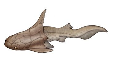 Brown scrapper shark