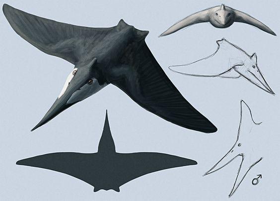 Mantapteryx