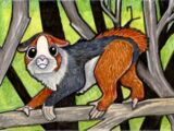 Speculative Zoology - guinea pig