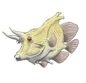 Horned butterflyfish