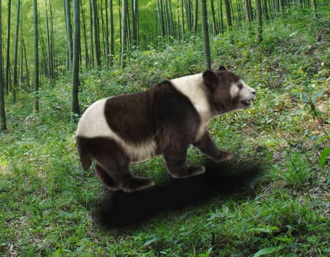 California panda (New Pleistocene)