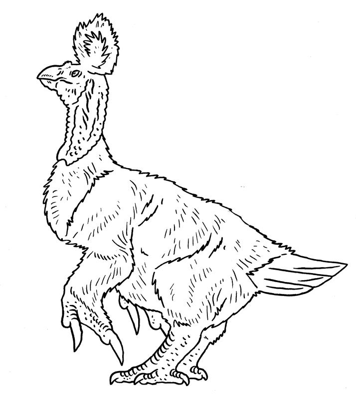 Bellybird