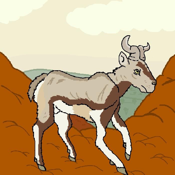 California bharal (New Pleistocene)
