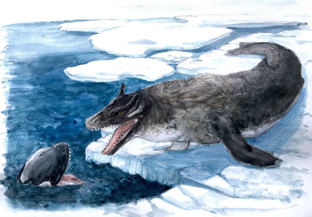Cetaceal