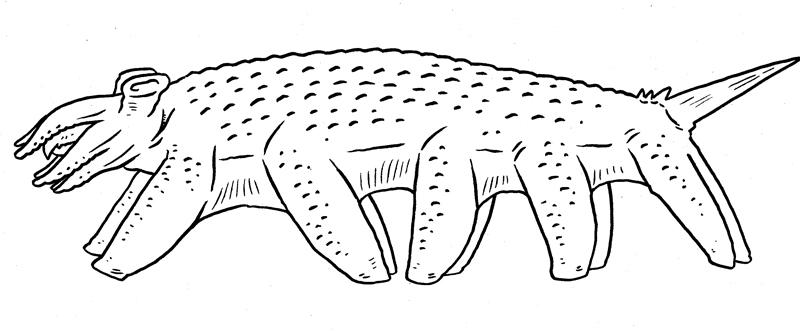 Centisquid