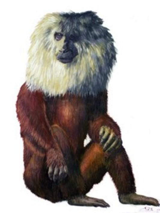 Bengal Ape