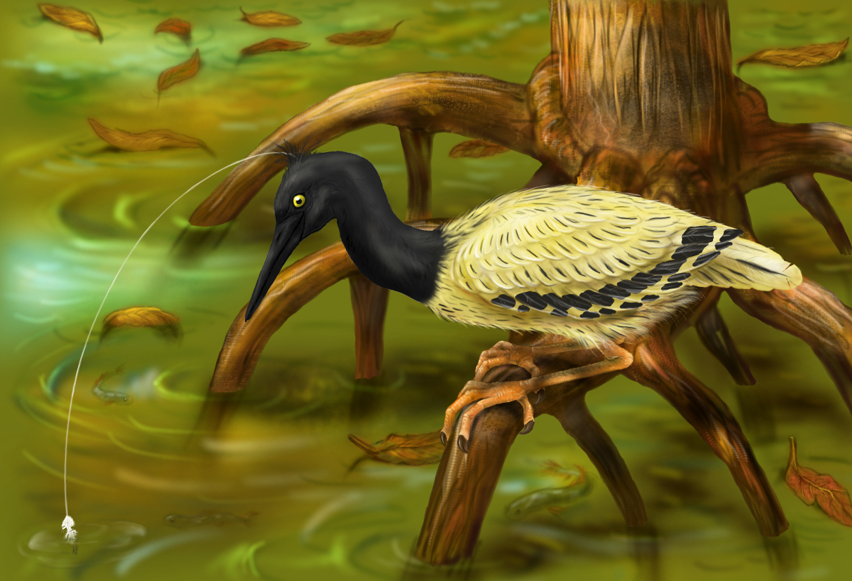 Black-headed angler heron