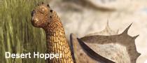 Desert hopper