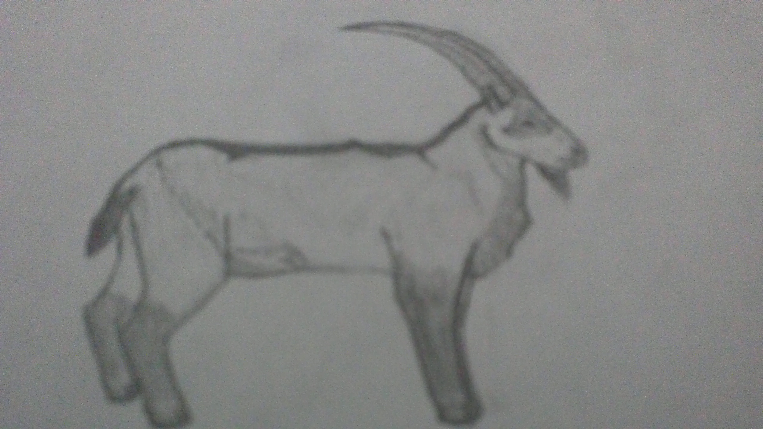 Canadian Ibex (New Pleistocene)