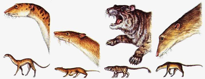 Predator rats