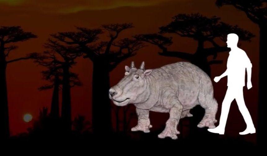Hippobuffalo