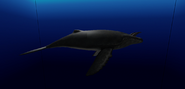 Giant Horned Whale