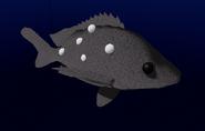 WhaleSharkSnapper