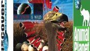 The Future is Wild (Original Animal Planet Version)