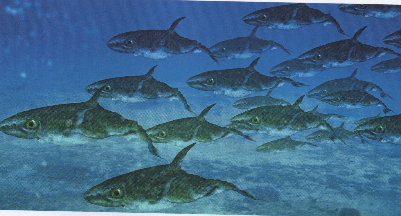 Rhombosepidae, the reign of cuttlefish