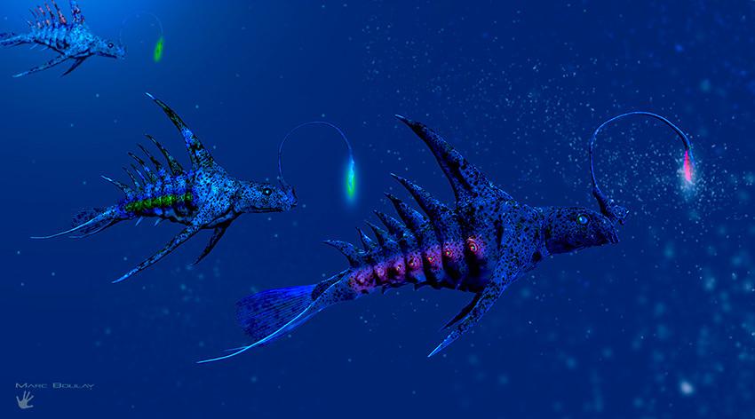 Stegoichthys luminosus