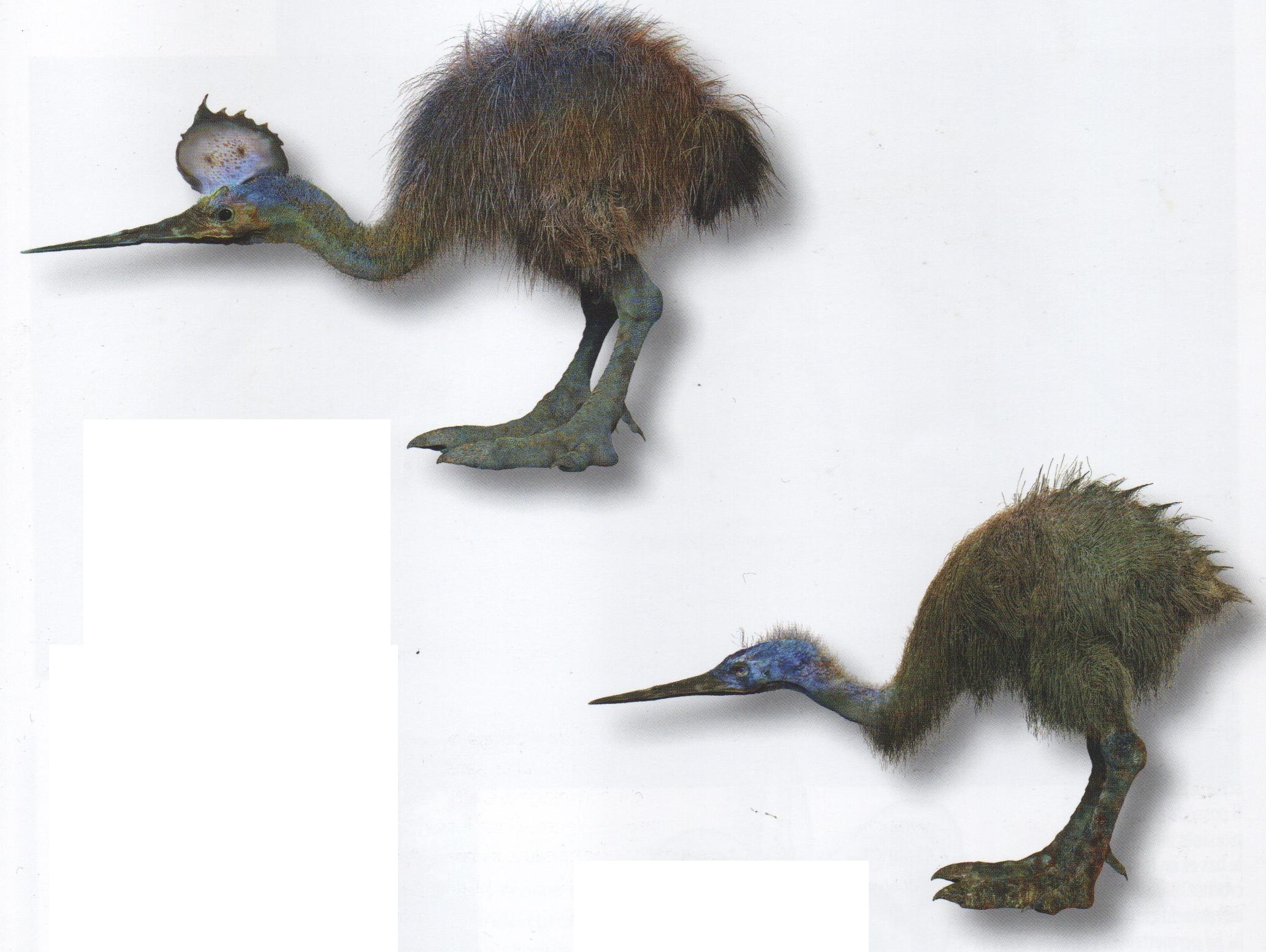 Tringapterus