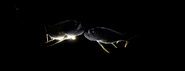 Black-Pebble Headed Xiphactigar