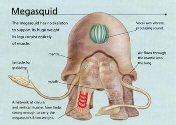 Megasquid2.jpg