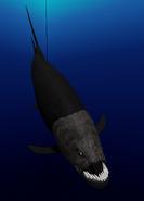Pacific goliath xiphactigar