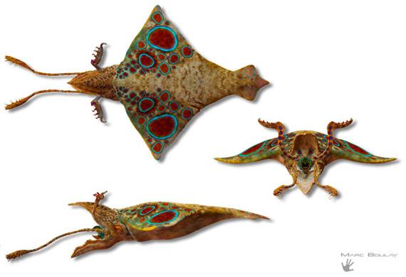 Rhombosepia imperator