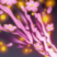Blossom Breeze Icon.png
