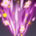 Bloom Swirl Icon.png