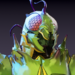 Bug Hunter Icon.png