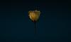 Backpacks - Flower screen1