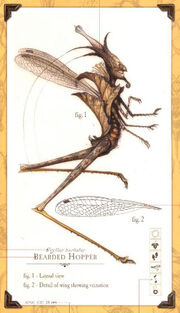 Bearvedhopper.bmp.jpg