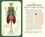 The Anatomy Sprite's Page