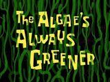 Dobre algi, gdzie nas nie ma