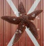 Dry Patrick
