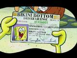SpongeBob's driver's license