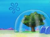Sandy's treedome