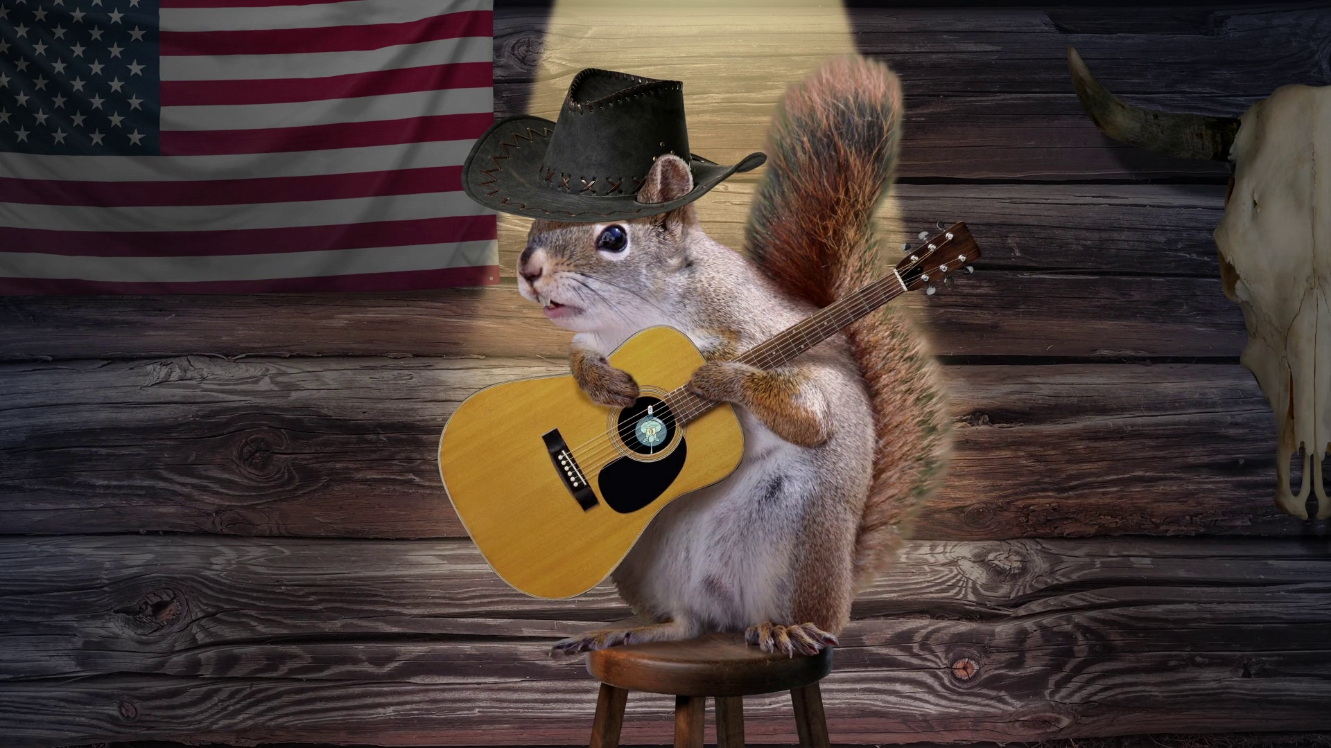 Country squirrel